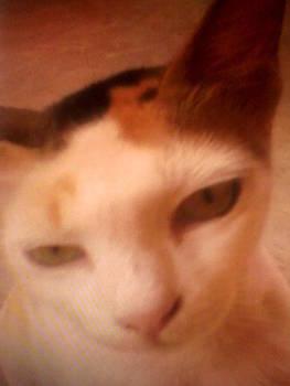 My Cat by Amisha Tripathy