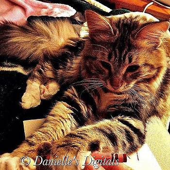 My Destiny by Danielle McNeil