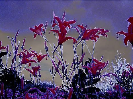 My Ditch Lillies by J R Seymour
