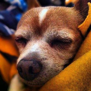 My Dog Odie Wrapped Up In My Blanket by David Leandro