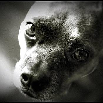 My Dog The Great Bugsy. #rreens #dog by Richard Reens