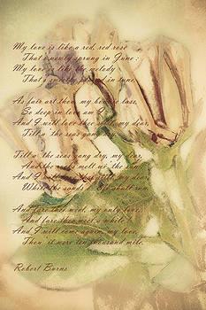 My Love is Like by Jill Balsam