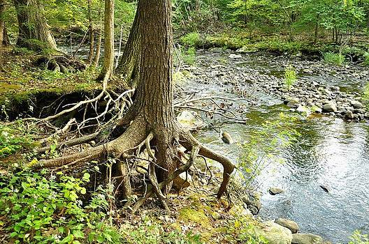 My Roots  by Gwen  Dubeau