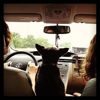 My View From The Backseat. I'm Not by Jeff Madlock
