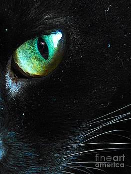 Mysterious Cat by Johann Wilkinson