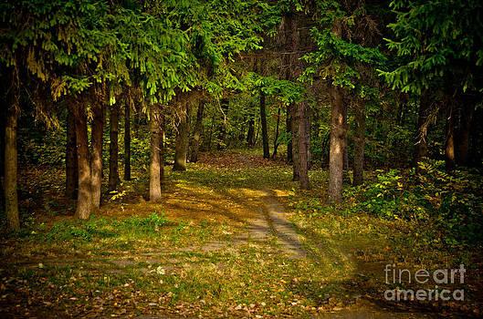 Mysterious way. by Presiyan Petrov