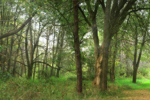 Scott Hovind - Mystic Forest