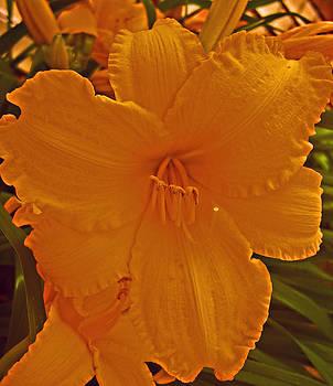 Michelle Cruz - Mystic Yellow Lily