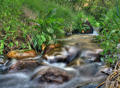 Mystical Stream Photo by Jeramie Curtice