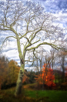 Mystical Tree 3743  by Ken Brodeur