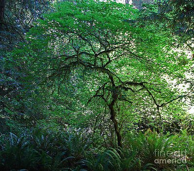 Mystical Tree by Suze Taylor
