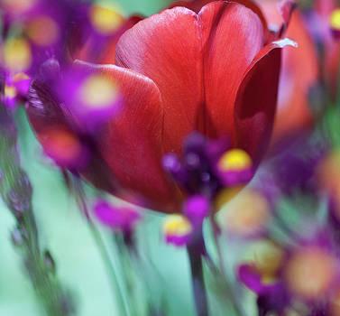 Gilbert Artiaga - Nagrita Tulip