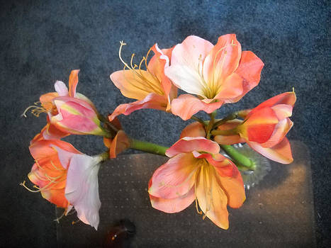 Naked Lady Flowers by Clifton Keller