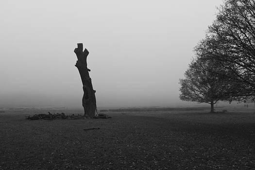Naked Tree by Maj Seda