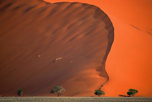 Namib Desert by Vittorio Ricci - Italy