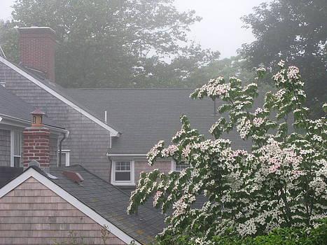 Nantucket Fog 76 by Julia Jones