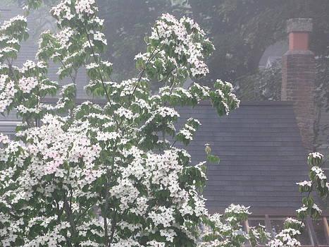 Nantucket Fog 79 by Julia Jones