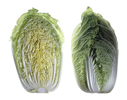 Napa Cabbage by Nathaniel Kolby