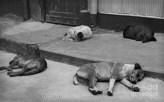 Napping friends in Valparaiso by Camilla Brattemark