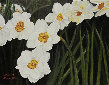 Narcissus by Gail Darnell