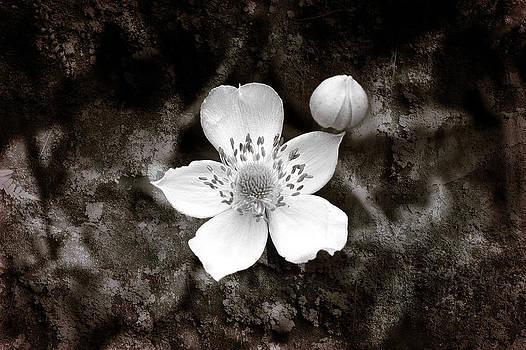Milena Ilieva - Nature Art
