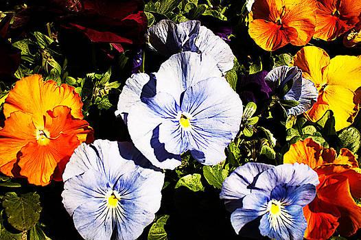 Milena Ilieva - Nature in Color