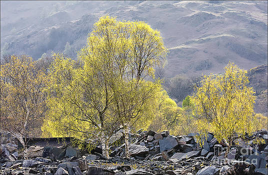 Nature Reclaiming Hodge Close Quarry by George Hodlin