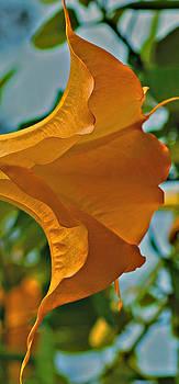 Michelle Cruz - Natures Blow Horn