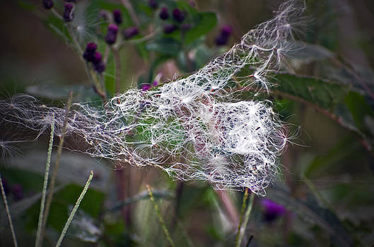Nature's Lace by Cheryl Cencich