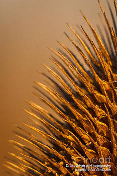Natures Pin Cushion by Scott Heister