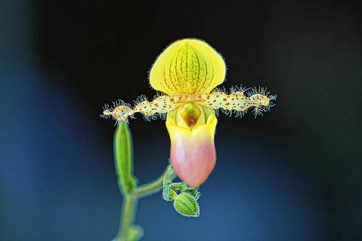 Nature's work by Dawn Nicoli