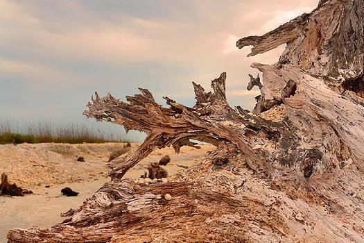 Carmen Del Valle - Natures Work of Art