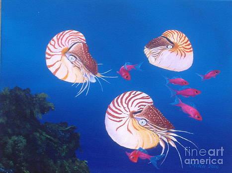 Nautilus Three by Michael Allen