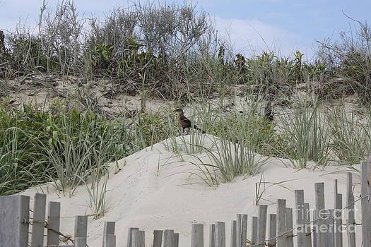 NC Beach Bird by Jaime  Manning