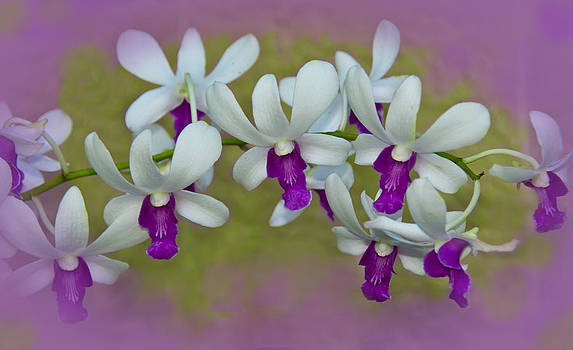 Necklace of Orchids by Beverly Hanson