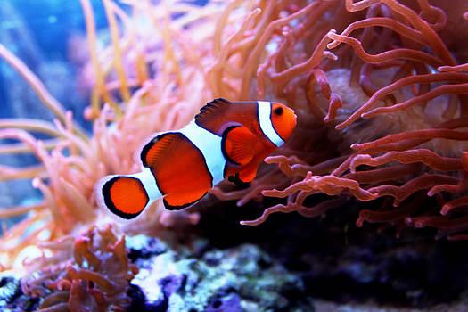 Nemo by Shweta Singh