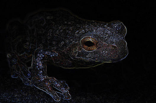 Neon Cope's Gray Tree Frog by Joseph Fuller