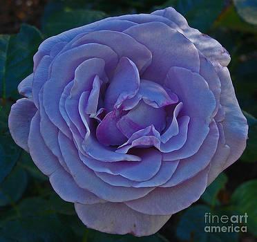 Neptune Cali Rose by Suze Taylor