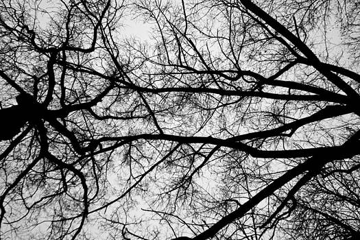Nervous system by Daniel Kulinski