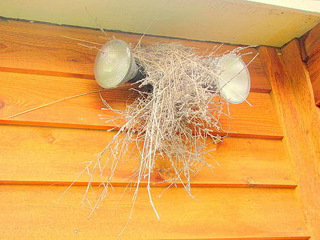 Nest on Lights by Amy Bradley