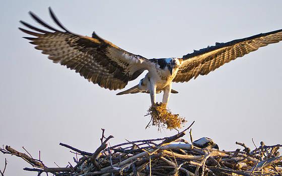 Nesting materials by Bob Lennox