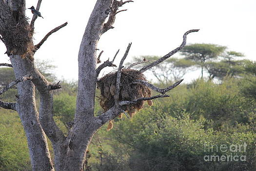 Nests by Alexandra Bento