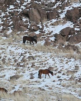 Nevada Mustangs by Lori Bristow