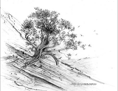 Jim Hubbard - Nevada-Pinyon Pine
