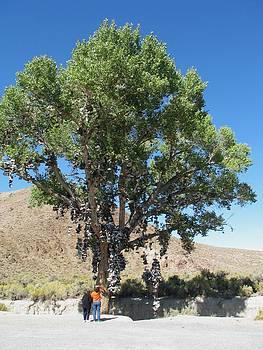 Nevada Shoe Tree by Edward Hass