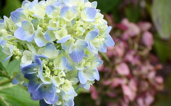 Annie Babineau - new bloom old bloom
