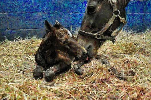 Terry Sita - New born foal