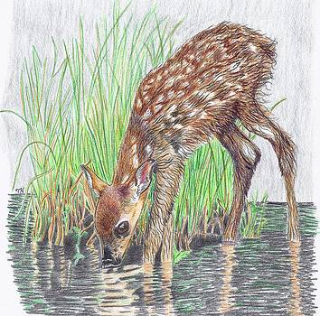 New Fawn Takes a Drink From Grassy Creek DuPont State Forest by Tony  Nelson