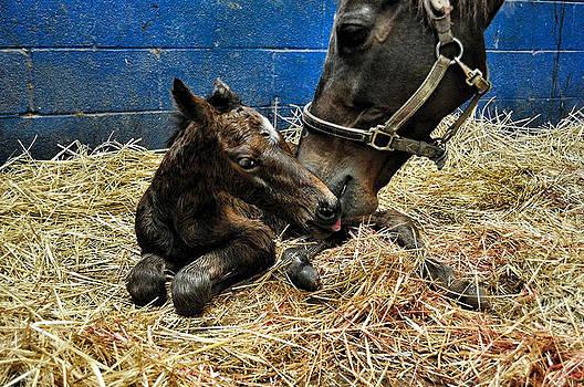 Terry Sita - New Foal