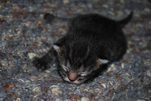 Michelle Cruz - New Kitty Crawls